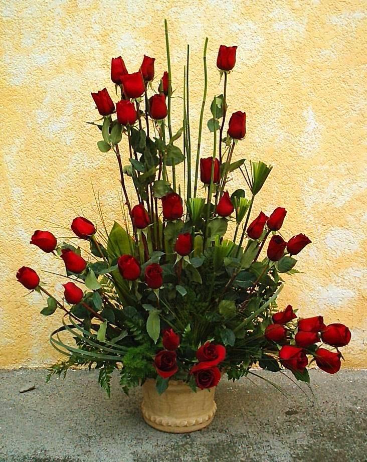 36 Rosas  Rojas